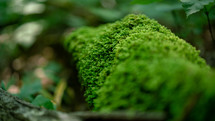 moss on a rock