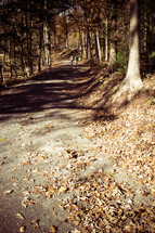 people walking on a dirt path through a fall forest