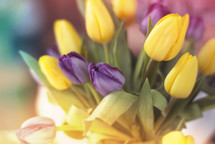 Springtime tulips. Purple and yellow!