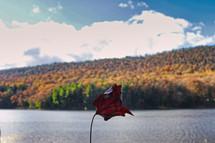 fall trees on a lake shore