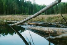 Reflections on still lake water