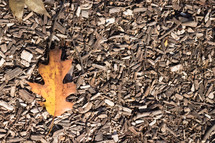 oak leaf on mulch