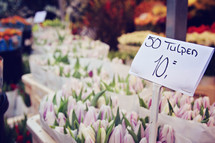 tulips at a flower shop