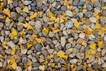 ginkgo leaves and stones and rocks