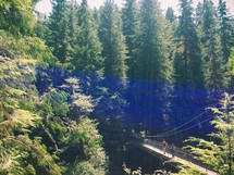People crossing a suspension bridge in a forest of trees.