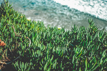 shore plants and ocean