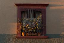 flowers in a barred window
