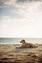 a dog resting on a beach