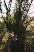 woman holding pine needles