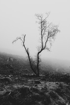 bare tree and fog