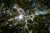 sunlight through forest canopy