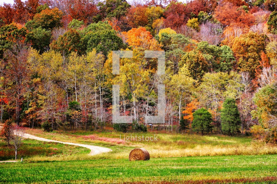 hay bale in front of autumn trees