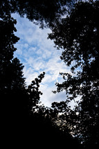 looking up at the clouds through tree branches