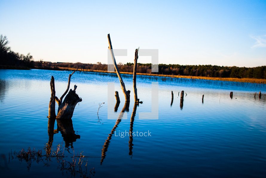 trees stumps in a lake