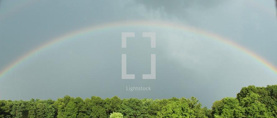 rainbow over tree tops