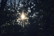 sunburst through the leaves of trees