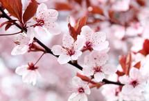 Spring trees in bloom.