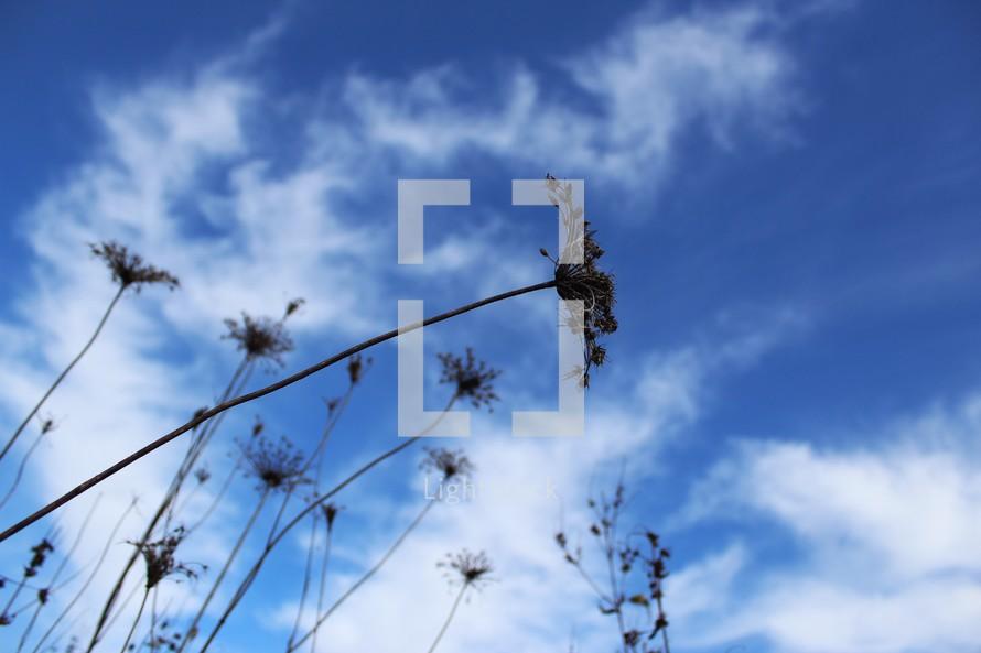 dried flowers against a blue sky