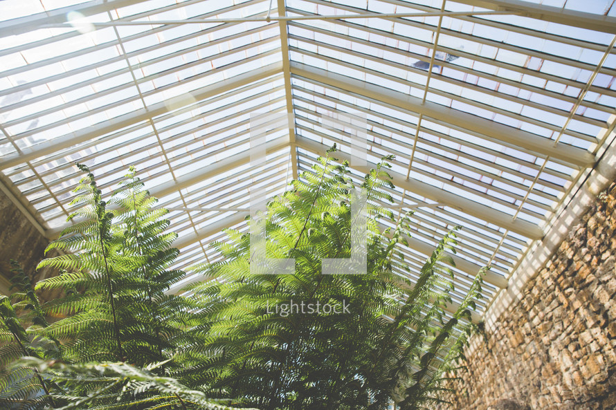 greenery under skylights