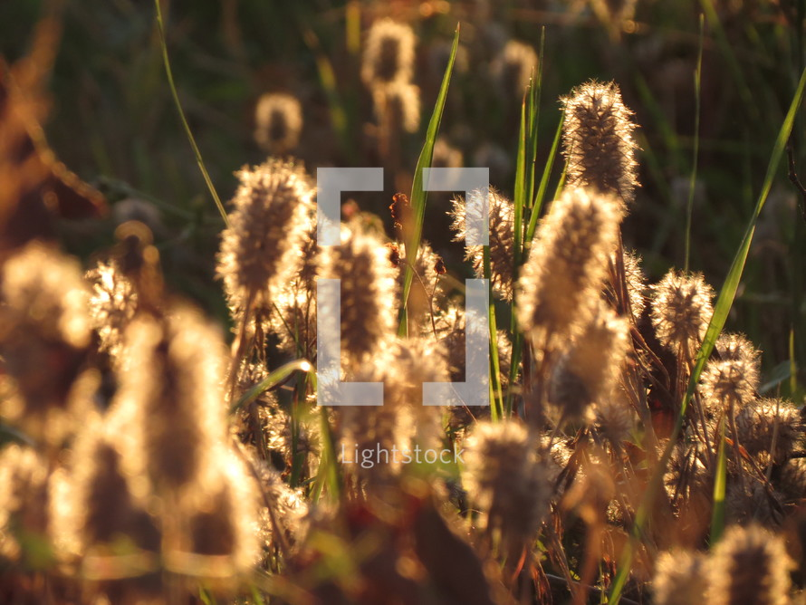 Tall grasses and dried flowers.
