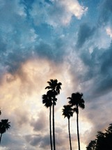 silhouettes of palm trees in a sky at sunset