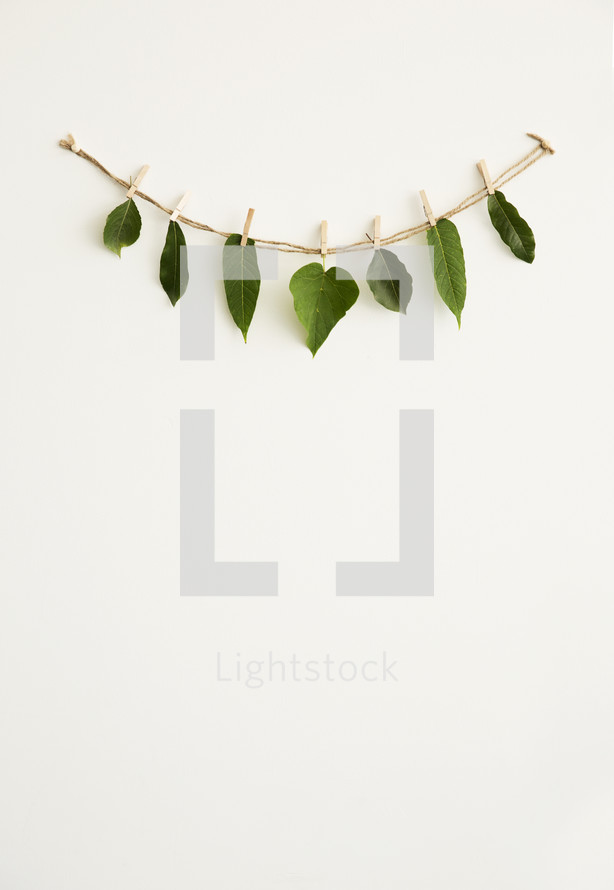 green leaves hanging on a string
