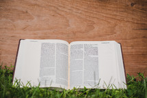 open Bible outdoors