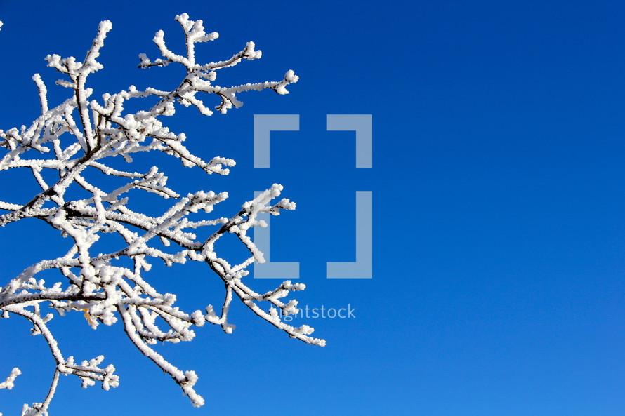 Snow on a tree limb against a cobalt blue sky.