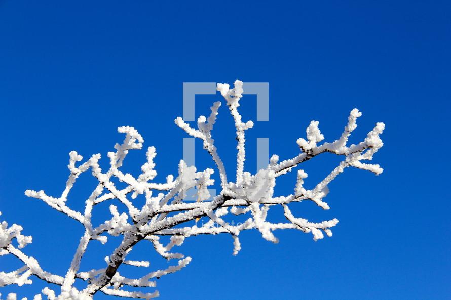 A winter tree branch.