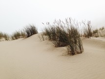 Grass on a dune