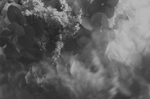 blurry flowers background in black and white