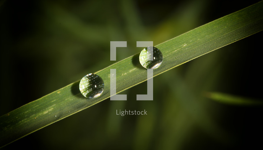 Dew drops on a blade of grass.