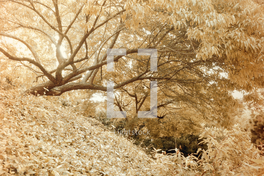 fall tree on a hill