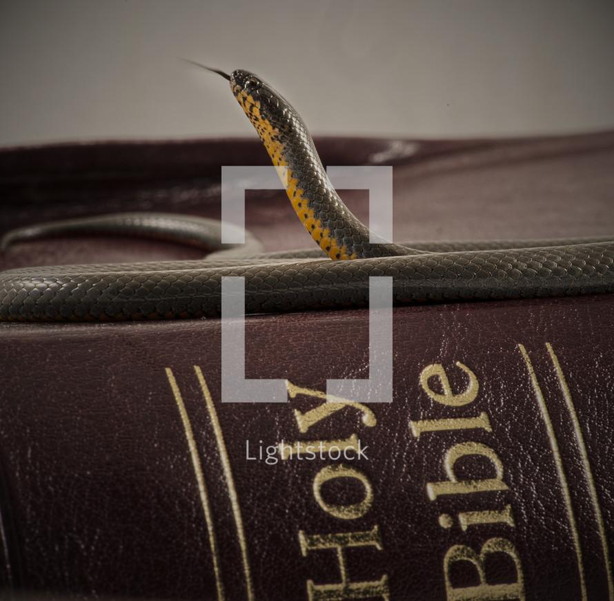 snake on a Bible