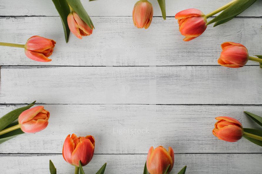 border of orange tulips on gray wood boards