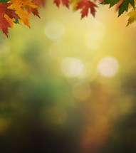 Sunlight through the fall leaves.