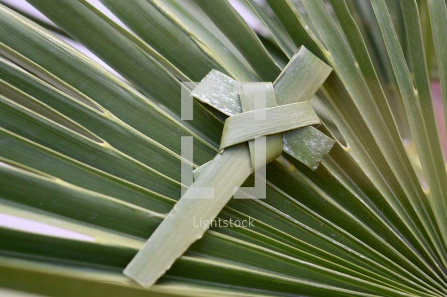 palm cross on a palm frond