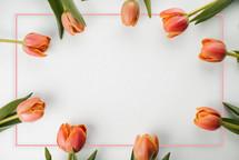 tulip frame border