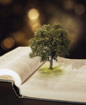 tree growing out of the pages of a Bible
