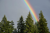 rainbow over trees in a forest