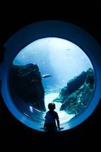 boy child looking at fish in an aquarium