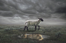 A surreal image of a lamb with a lion reflection