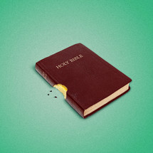 Bite out of a Bible and three seeds