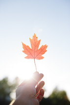 hand holding up a fall maple leaf