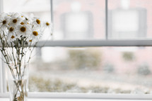 white daisies in a vase near a window