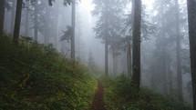 path through a foggy forest