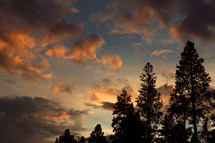Sunset in Colorado with pine trees