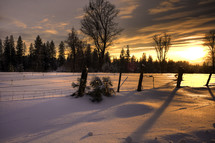 Snow-covered ground near a forest, at sunset