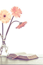 gerber daisies in a vase and an open Bible