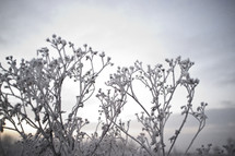 ice on branches outdoors